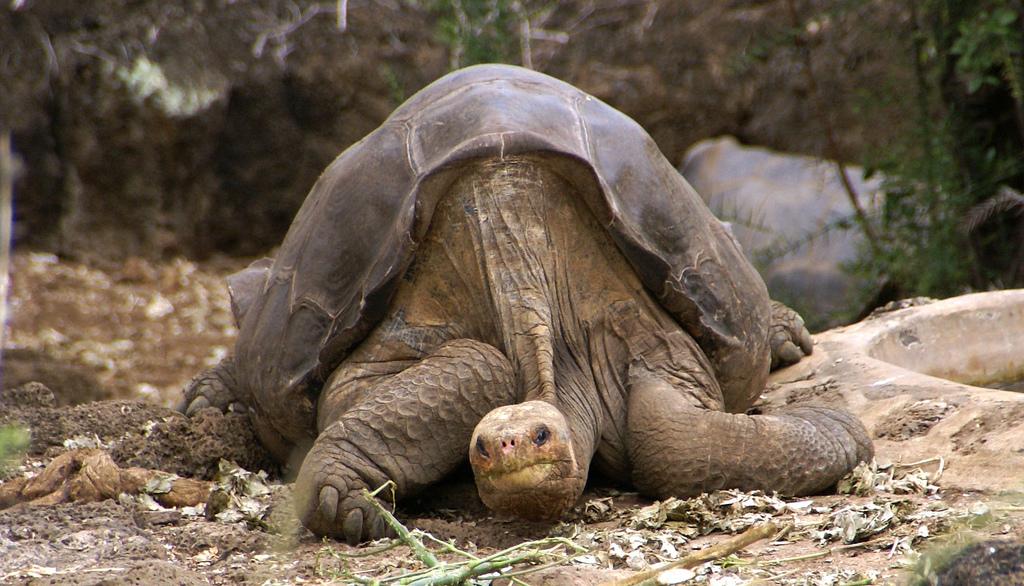 Top 7 des animaux qui vivent le plus longtemps