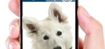 Top 7 des accessoires pour chien originaux